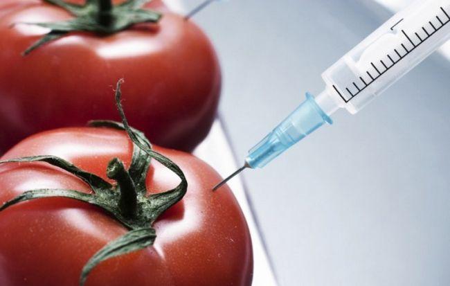 Чем вредны генетически модифицированные продукты