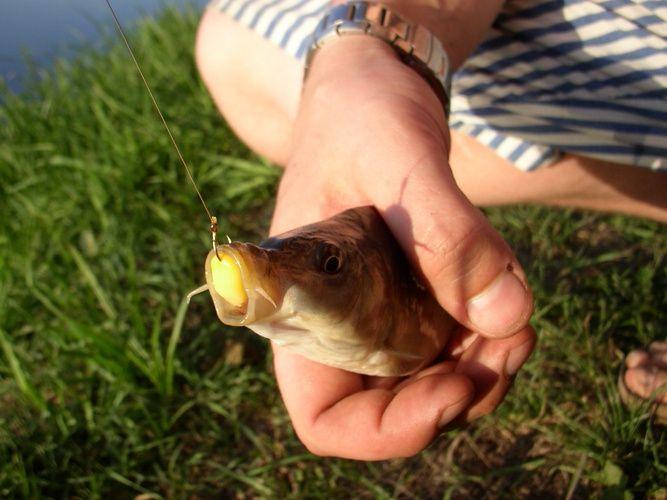 Как поймать рыбу