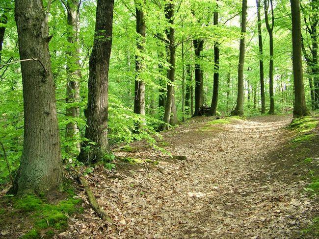 Как выбраться из леса