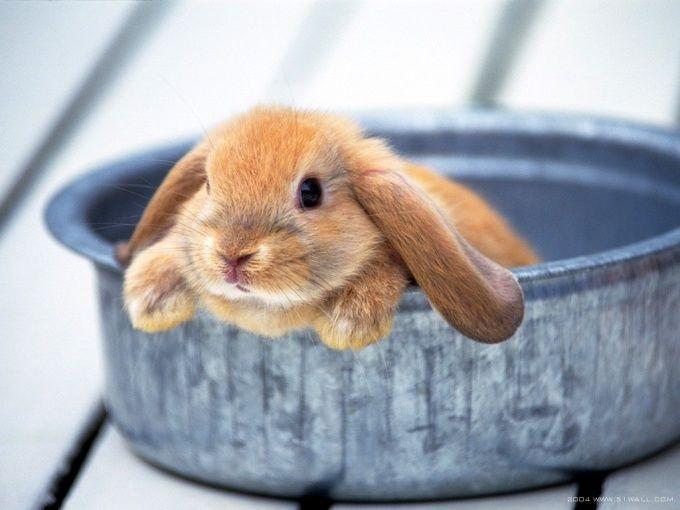 Как лечить кролика